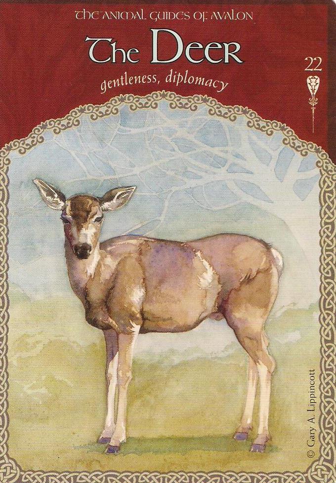 Wisdom Of Avalon Oracle Cards Colette Baron Reid Mystic Wish