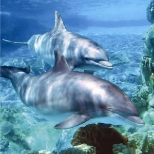 dolphin birthday cd card