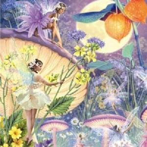 fairy greetings card music cd